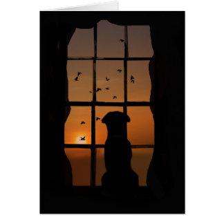 Perda de cartão de simpatia do cão