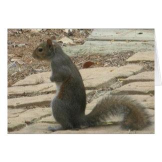 Perdido sem você o cartão do esquilo