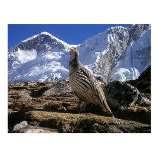 Perdiz no cartão dos Himalayas