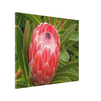 Perfeição do Protea da cópia das canvas