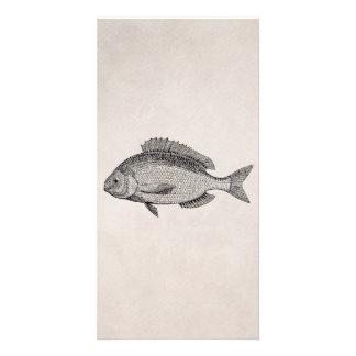 Pergaminho retro dos peixes dos peixes do sargo do cartão com foto