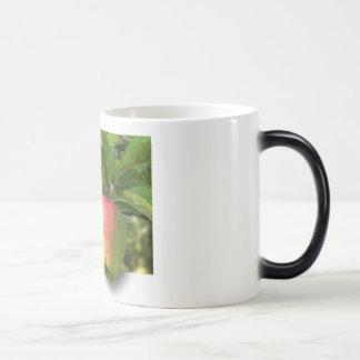 Personalize canecas de café