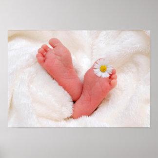 Pés do bebê com margarida pôster