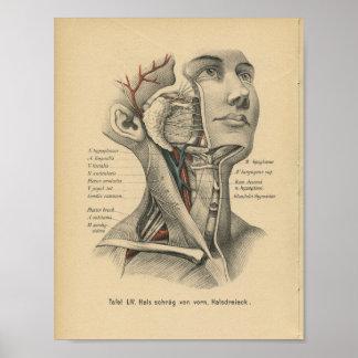 Pescoço da cabeça de impressão da anatomia do