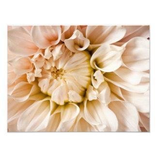 Pêssego, rosa, branco, & fundo de creme da dália impressão fotográficas