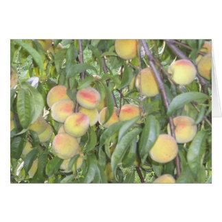 Pêssegos no cartão da árvore