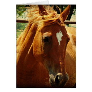Pferde Alles Gute Zum Geburtstag Cartões