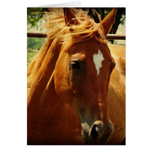 Pferde, Alles Gute Zum Geburtstag Cartões