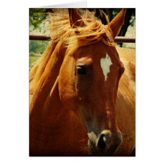 Pferde, Alles Gute Zum Geburtstag Cartão Comemorativo