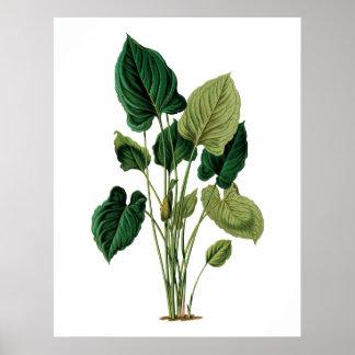 Philodendron botânico do impressão das folhas