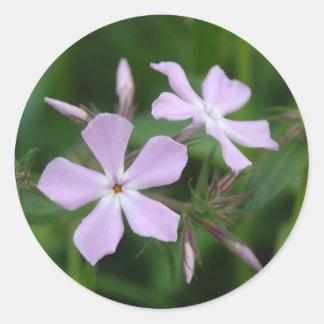 Phlox cor-de-rosa adesivo