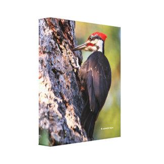 Pica-pau bonito de Pileated na árvore Impressão Em Canvas