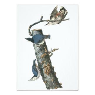 Pica-pau-cinzento Branco-breasted, John Audubon Convite 12.7 X 17.78cm