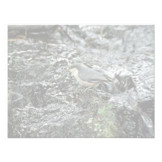 Pica-pau-cinzento do pigmeu convite