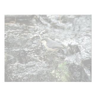 Pica-pau-cinzento do pigmeu convites
