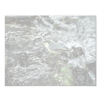 Pica-pau-cinzento do pigmeu convite 10.79 x 13.97cm