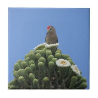 Pica-pau de Gila em flores do Saguaro