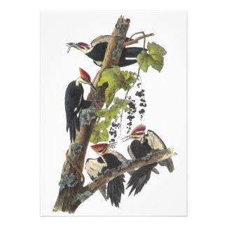Pica-pau de Pileated John Audubon Convites Personalizado