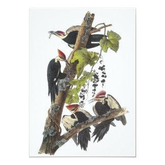 Pica-pau de Pileated, John Audubon Convite 12.7 X 17.78cm