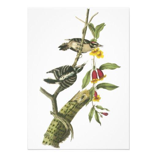 Pica-pau Downy - John Audubon Convite