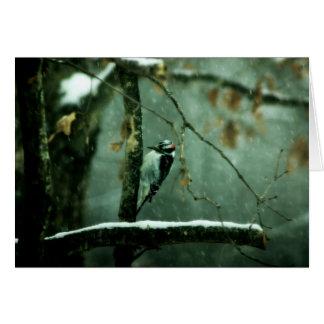 Pica-pau no cartão da neve