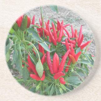Pimentas vermelhas que penduram na planta porta copos de arenito