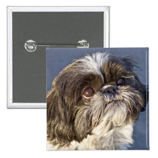 Pin bonito do filhote de cachorro de Shih Tzu Bóton Quadrado 5.08cm