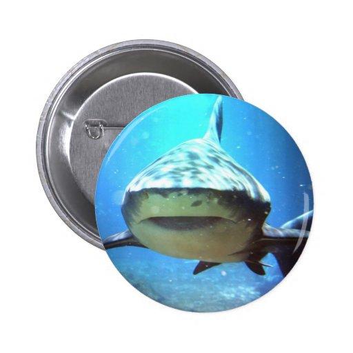 Pin redondo do tubarão boton
