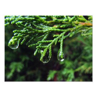 Pingos de chuva em um ramo de árvore (#2) impressão de foto