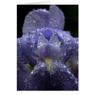 Pingos de chuva na íris - cartão