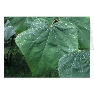 Pingos de chuva nas folhas, cartão