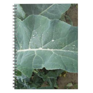 Pingos de chuva nas folhas da couve-flor caderno espiral