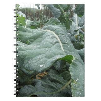 Pingos de chuva nas folhas da couve-flor cadernos espiral