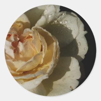 Pingos de chuva no rosa branco de creme de adesivo