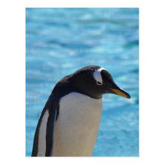Pinguim bonito cartão postal