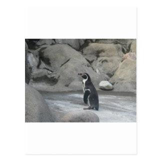 Pinguim Cartão Postal
