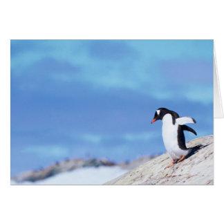 Pinguim de Gentoo - cartão de nota