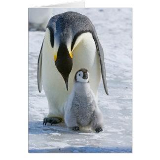 Pinguim de imperador com pintinho - cartão de nota