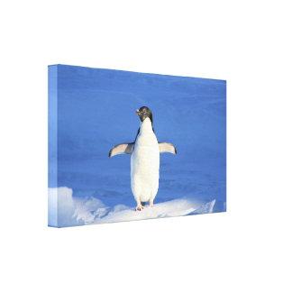 Pinguim no impressão das canvas do gelo impressão de canvas envolvida