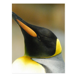 Pinguim perfeito cartão postal