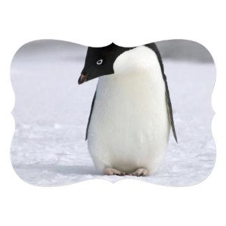 Pinguim só convite 12.7 x 17.78cm