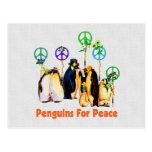 Pinguins da paz cartão postal