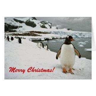 Pinguins de Gentoo no cartão de Natal da Antártica
