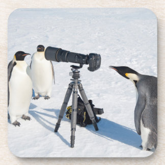 Pinguins de imperador com câmera - porta copos da
