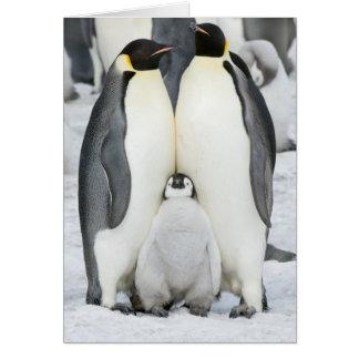 Pinguins de imperador com pintinho - cartão de