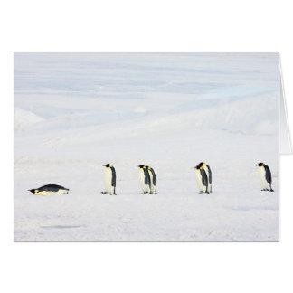 Pinguins de imperador no gelo - cartão de nota