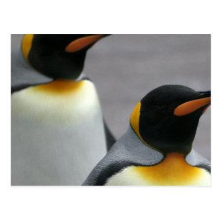 Pinguins de marcha cartão postal