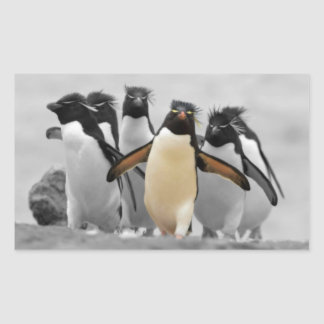 Pinguins de Rockhopper Adesivo Retangular