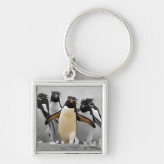 Pinguins de Rockhopper Chaveiro Quadrado Na Cor Prata