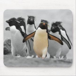 Pinguins de Rockhopper Mouse Pad